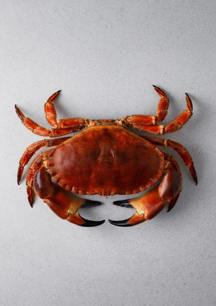 boiled-crab-on-marble-surface-daylight food photography fotografia jedla graphic london bratislava